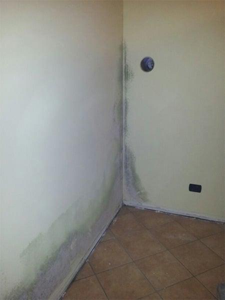 Muffa in casa modena carpi come eliminare umidit di - Muffa e umidita in casa ...